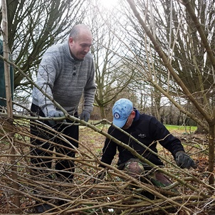 Volunteers learning how to lay a hedge