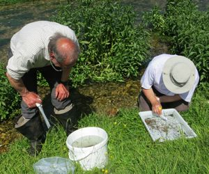 Riverfly monitoring in progress