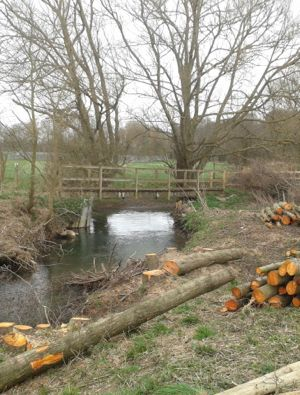 Tree work along the River Ash