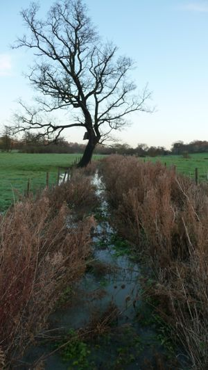 The ditch in the meadow at Widford