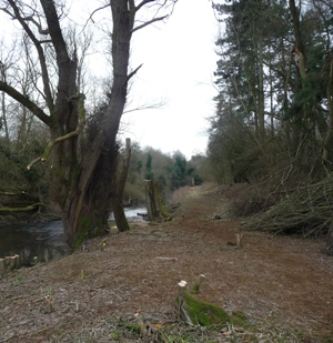 Tree works completed along the River Beane