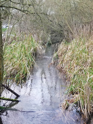 River and reedbed restoration at Duck Trap Wood