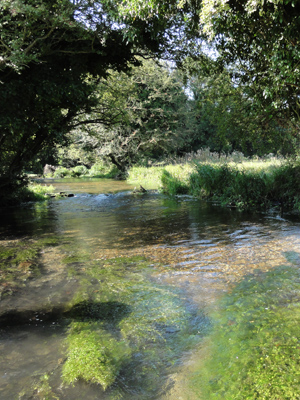 Achieve protected status for the River Mimram