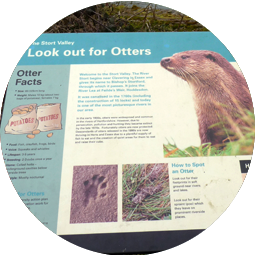 Restore otters to the Stort